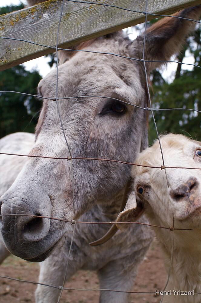 Donkey and friend by Henri Irizarri