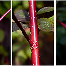 Stems by Steve plowman