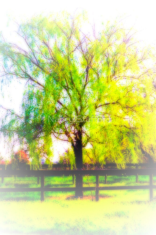 Old Willow by Nancy Stafford