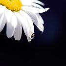Morning Dew by Lisa Knechtel