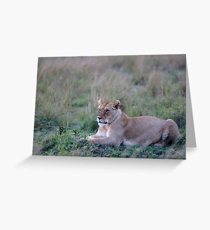 Lionness in the cold morning Greeting Card