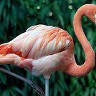Flamingo Portrait by TJ Baccari Photography