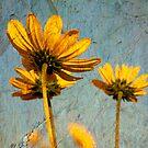Sunflowers by Jonicool