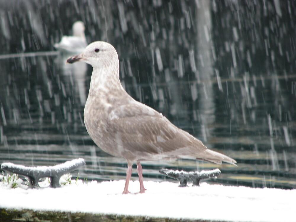 Sea Gull by lilestduncan