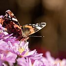 Autumn butterfly by Dominika Aniola