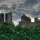 NYC via Central Park by jennydarina