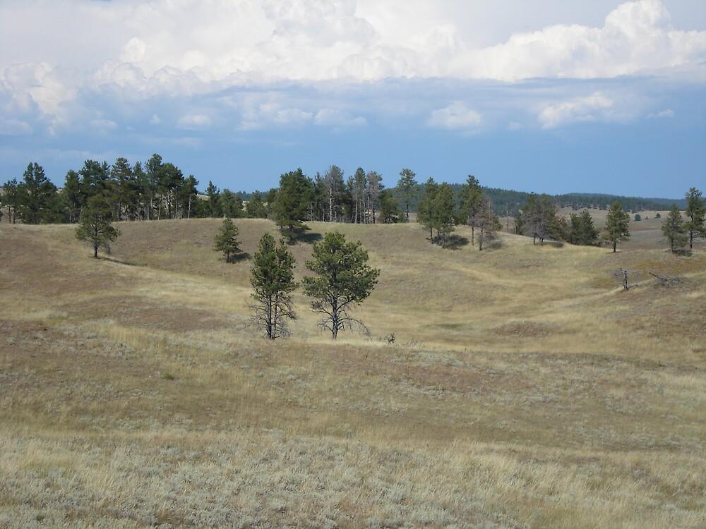 Black Hills, SD by AMatth