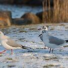 Seagulls Experience by JonnisArt
