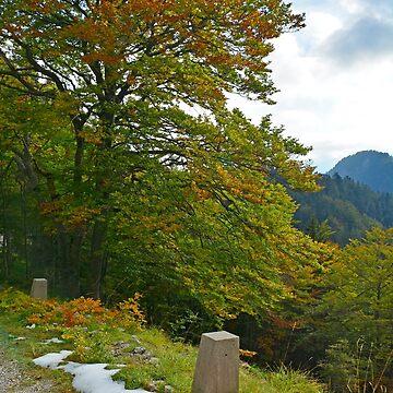 Autumn on the Slopes of Mangrt  by jojobob