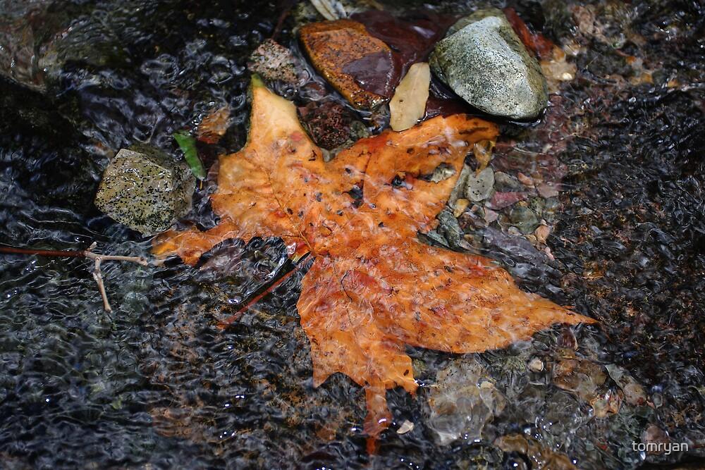Leaf In The Stream by tomryan
