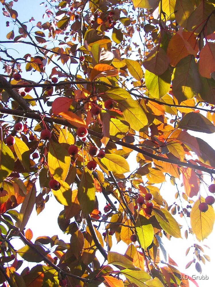 Fall Gold, Autumn Illuminated, Colorado Springs, CO 2008 by J.D. Grubb