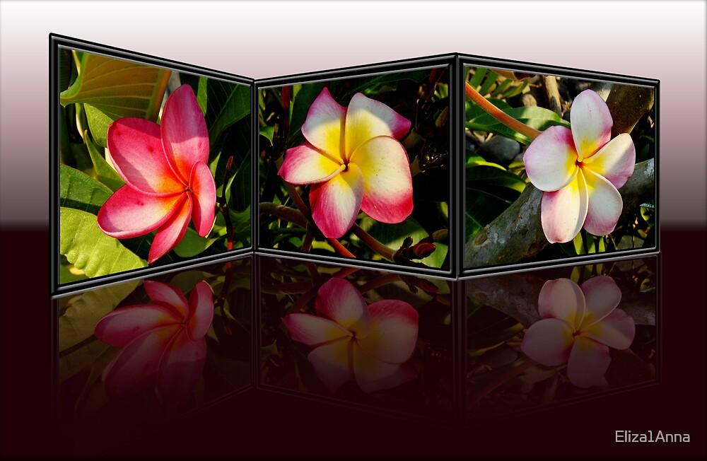 Plumeria reflected by Eliza1Anna