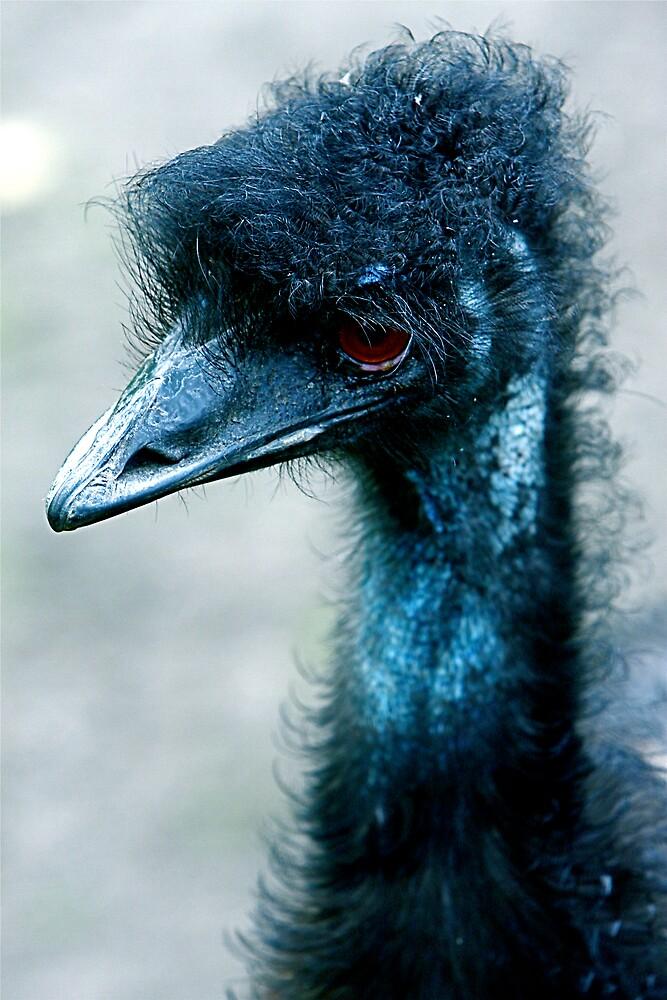 Emu by IanPharesPhoto
