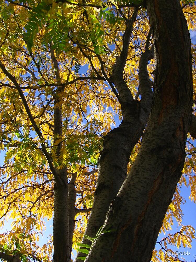 Yellow-green, Autumn Illuminated, Colorado Springs, CO 2008 by J.D. Grubb