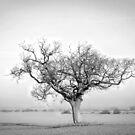 Tree by JEZ22