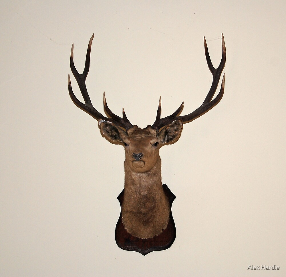 Scottish Stag by Alex Hardie