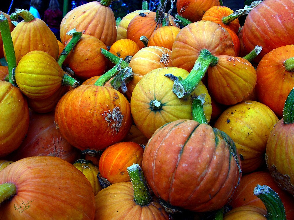 Whidbey Pumpkins Three by Rick Lawler