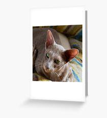 Farida the lilac Oriental cat Greeting Card