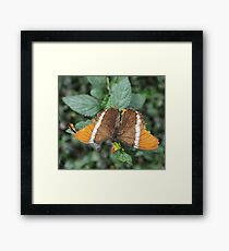close-up of an orange-brown butterfly Framed Print