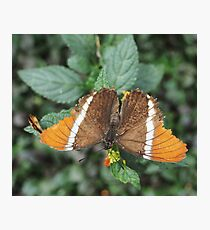 close-up of an orange-brown butterfly Photographic Print
