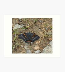 greyish-black butterfly with bright orange stripes Art Print