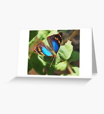 small butterfly with dark wings, bright blue and orange pattern Greeting Card
