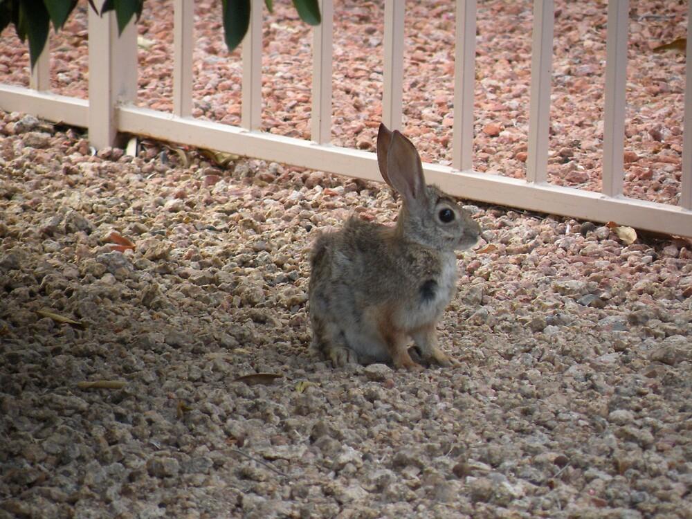 Rabbit in the wind by Bonnie Pelton
