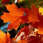 Herbstlaub im Wind von jammingene
