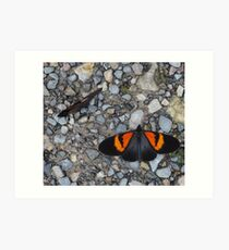 Two black and orange butterflies Art Print