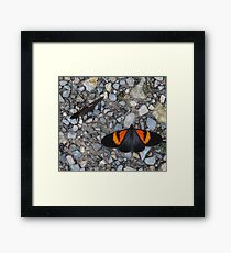 Two black and orange butterflies Framed Print