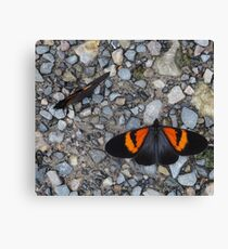 Two black and orange butterflies Canvas Print