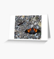 Two black and orange butterflies Greeting Card