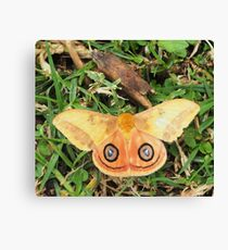 Yellow butterfly or moth Canvas Print