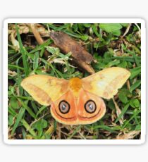Yellow butterfly or moth Sticker