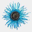 Blue Button Jelly Fish - Porpita porpita by Normf