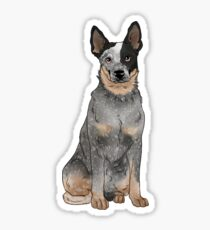 Blue Australian Cattle Dog Sticker
