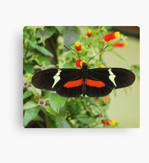 Black and red butterfly with wide wings Canvas Print