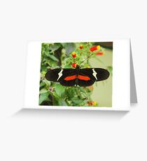 Black and red butterfly with wide wings Greeting Card