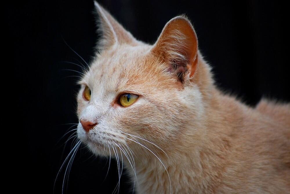 Barn Cat 2 by Robert Goulet
