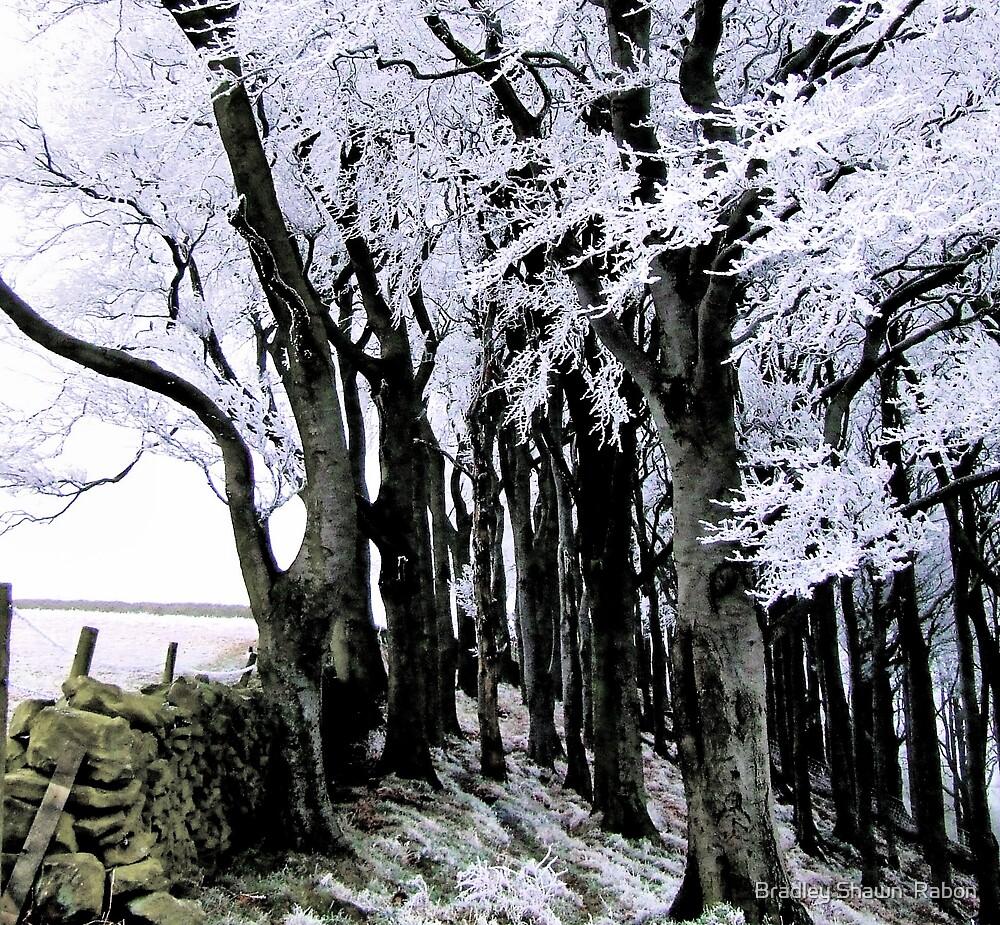 """""""Winter White"""" by Bradley Shawn  Rabon"""