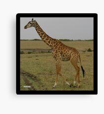 Lonely Giraffe Canvas Print