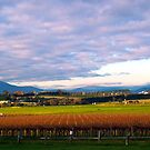 Yarra Valley Winery by Christine Wilson
