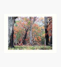 Bushfire Regeneration Art Print