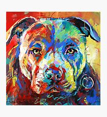 Stafforshire Bull Terrier Photographic Print