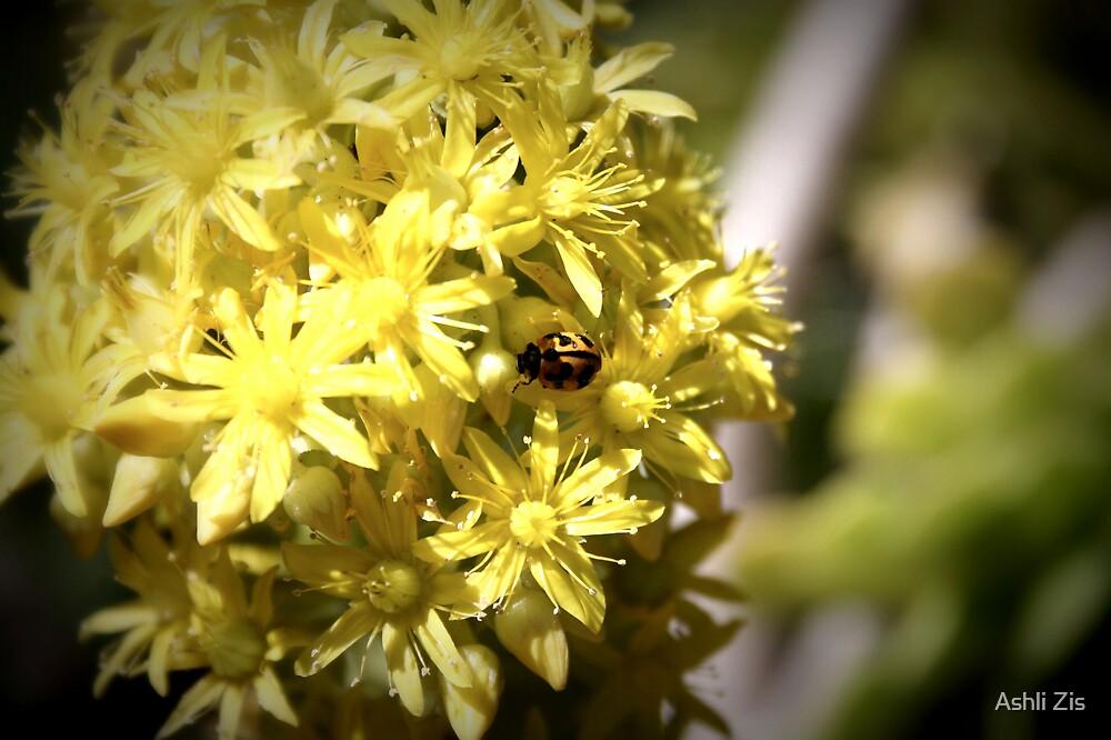 Ladybug by Ashli Zis