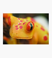Plastic Froggy Photographic Print