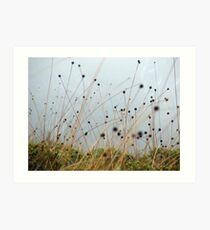 Button Grass Art Print