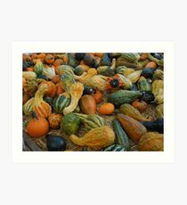 A variety of squashes Art Print