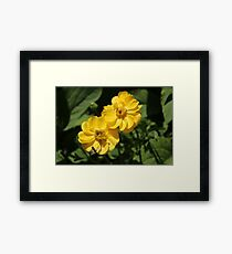 Busy Bee on Yellow Flower Framed Print