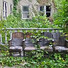 Seating Amidst the Vines by Steven Godfrey